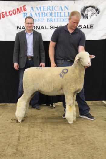 American Rambouillet Sheep Breeders Association