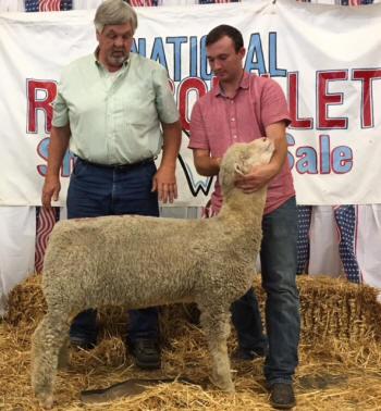 American Rambouillet Sheep Breeders Association