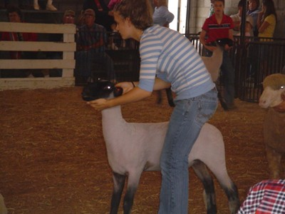3rd place overall market lamb